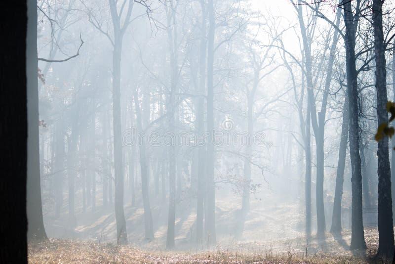 Floresta do outono com névoa Irpin ucrânia fotografia de stock royalty free