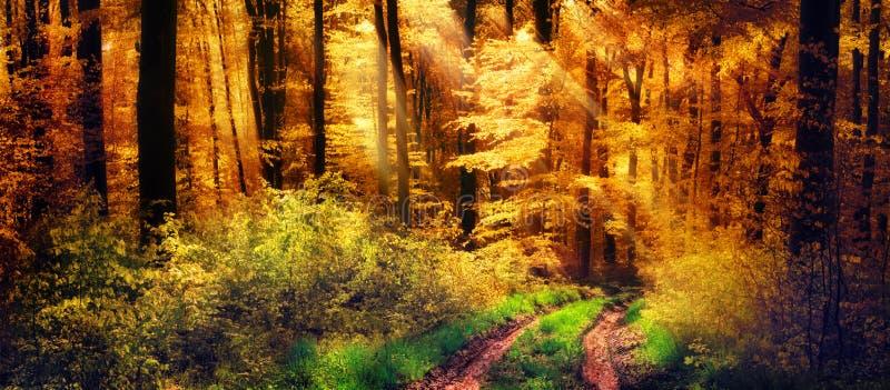 Floresta do outono com raios de luz mornos fotografia de stock