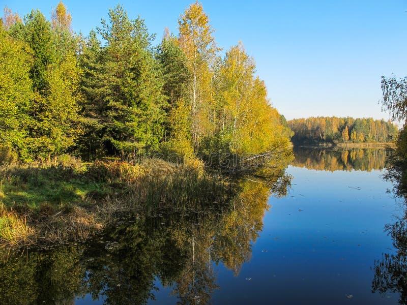 Floresta do outono com um lago bonito no dia ensolarado Colorfu brilhante imagem de stock