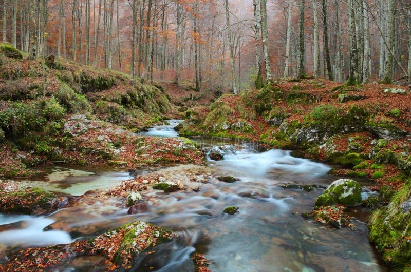 Floresta do outono com um rio da montanha imagens de stock royalty free
