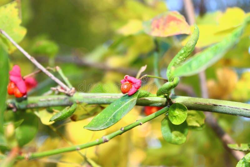 Floresta do outono, madeira do outono fotografia de stock royalty free