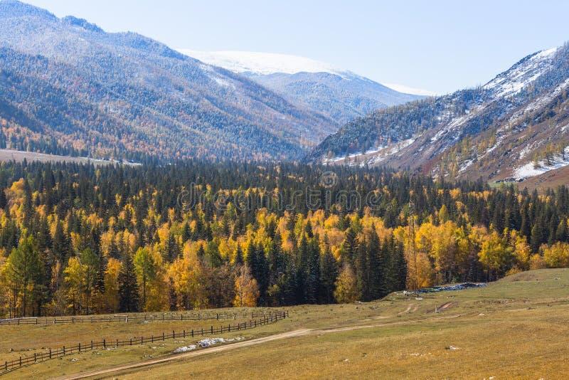 Floresta do outono no Gorny Altay, Rússia nave imagens de stock