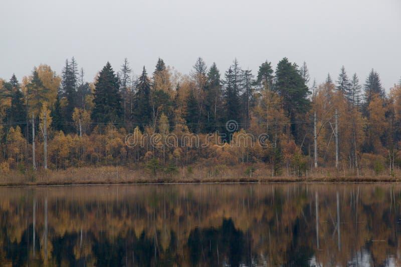Floresta do outono perto do lago imagem de stock royalty free