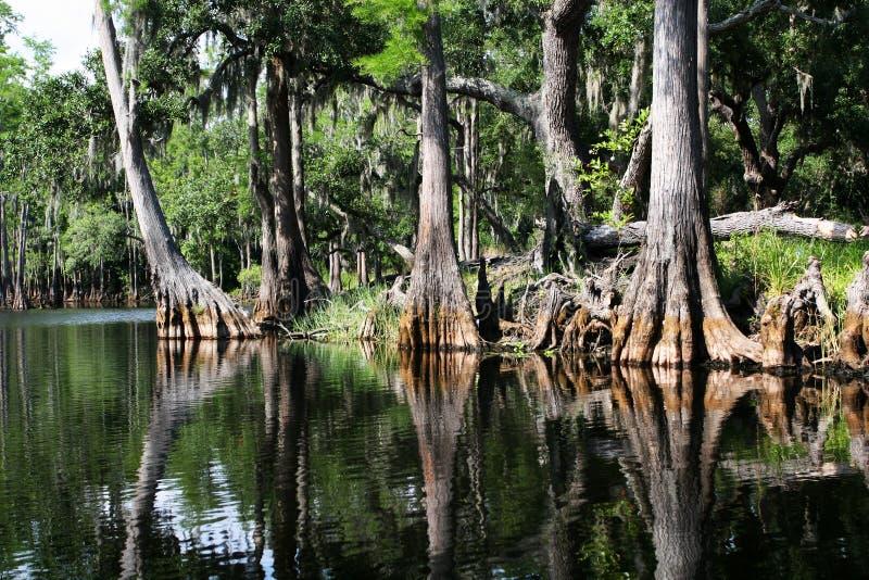 Floresta do pântano fotografia de stock