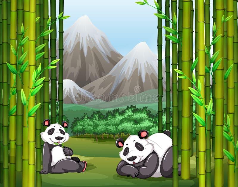 Floresta do panda e a de bambu ilustração royalty free