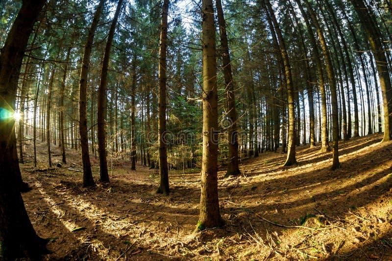 floresta do Peixe-olho fotografia de stock royalty free