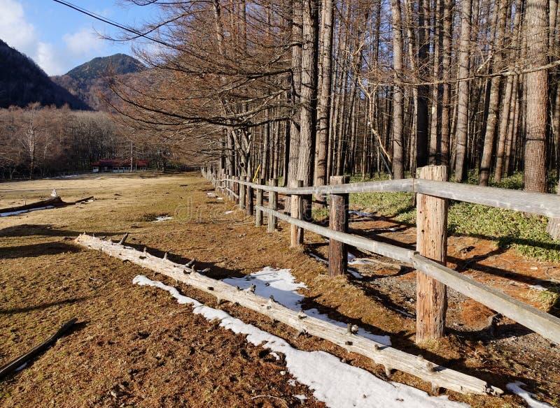 Floresta do pinheiro em Nikko, Japão fotografia de stock royalty free