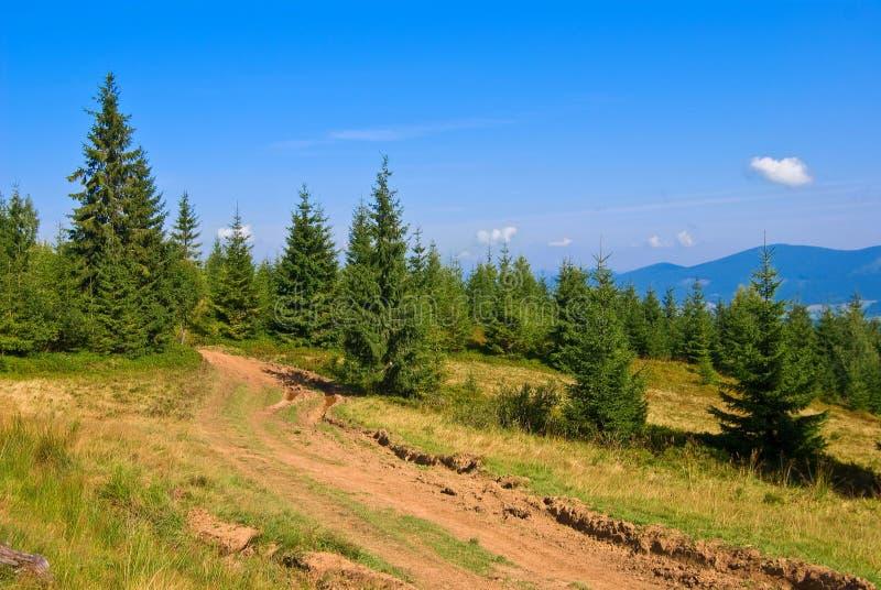 Floresta do pinho de montanha fotos de stock royalty free
