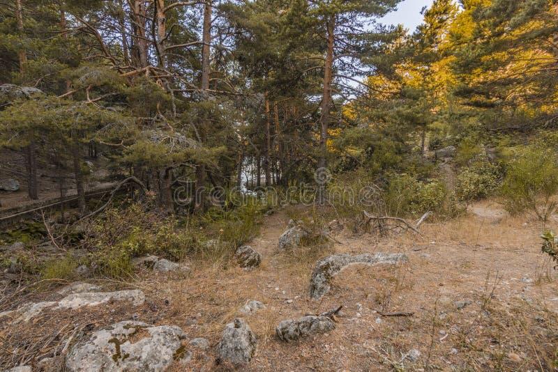 Floresta do pinho na inclinação e no córrego de montanha Madrid Spain fotos de stock