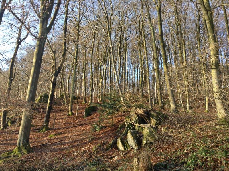 Floresta do por do sol imagens de stock royalty free