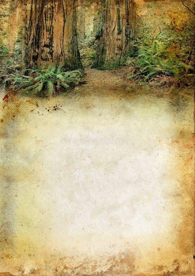 Floresta do Redwood acima de um fundo de Grunge ilustração royalty free