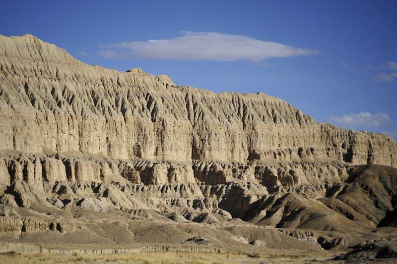 Floresta do solo--Tibet foto de stock royalty free