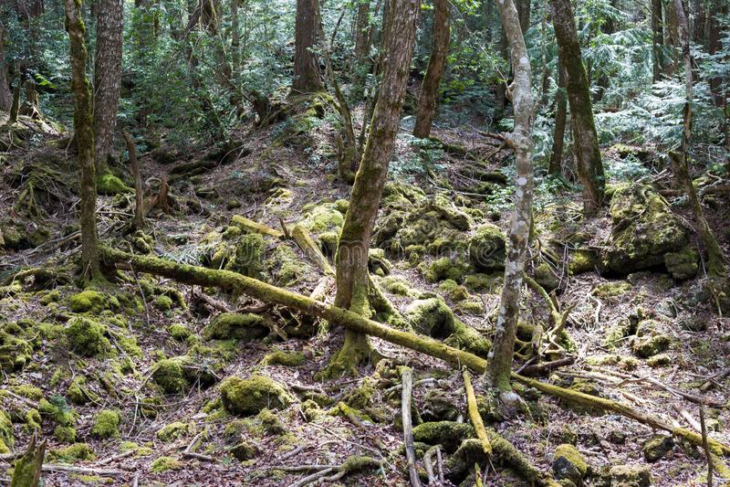 Floresta do suic?dio fotos de stock