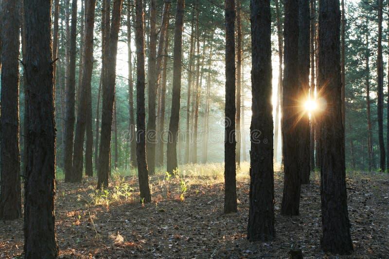 Floresta do verão fotografia de stock