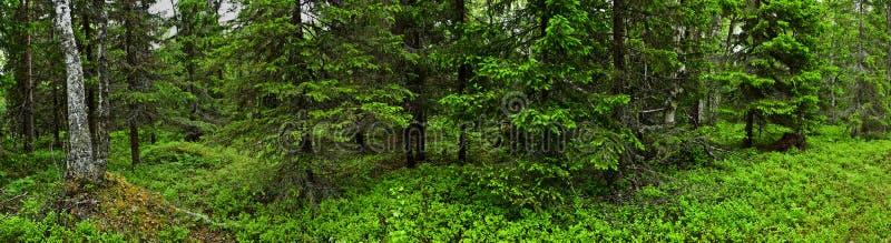 Floresta do verão imagem de stock