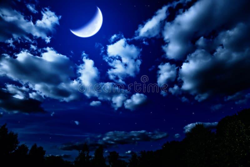 Floresta do verão da noite com e lua fotografia de stock royalty free