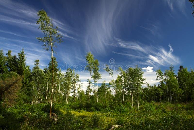 Floresta do verão e pântano Europa imagem de stock royalty free