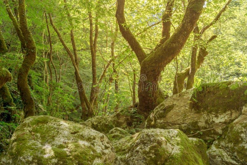 A floresta do verão na manhã foto de stock royalty free