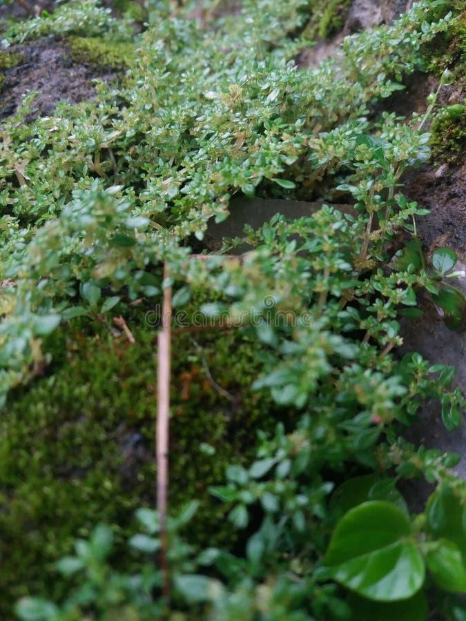 Floresta do verde da folha da árvore imagem de stock