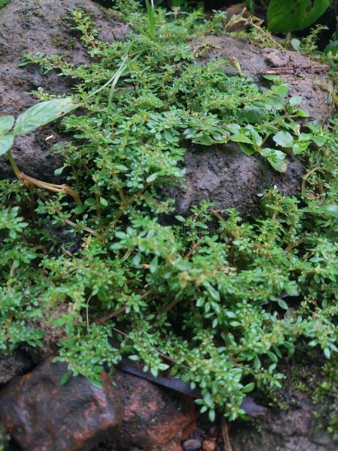 Floresta do verde da folha da árvore foto de stock royalty free