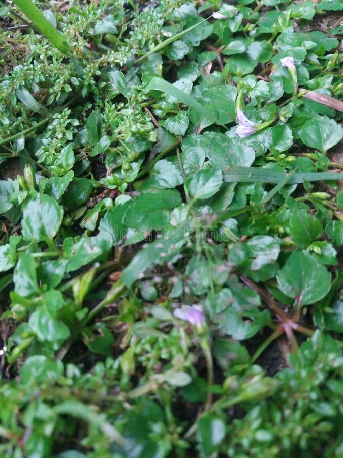 Floresta do verde da folha da árvore imagem de stock royalty free