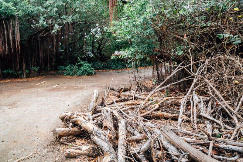 Floresta do verde da ilha de Cijin em Kaohsiung, Taiwan fotografia de stock