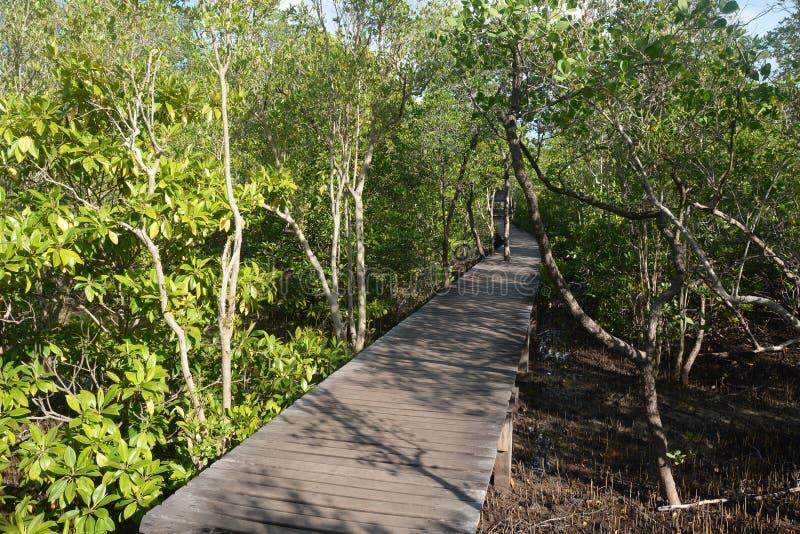 Floresta dos manguezais com maneira de madeira da caminhada imagens de stock royalty free