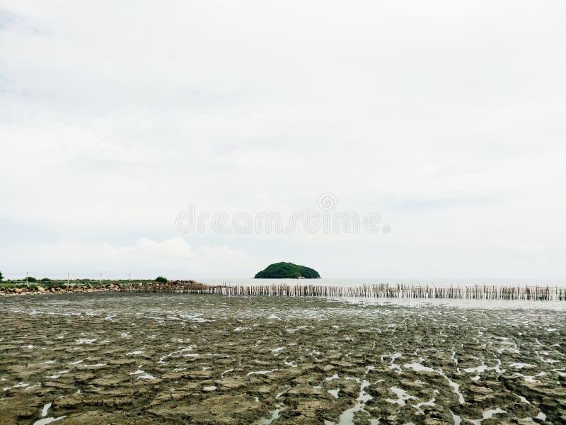 Floresta dos manguezais e a ilha só foto de stock