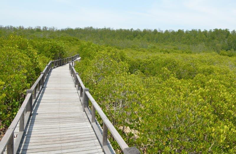 A floresta dos manguezais em Ásia fotografia de stock royalty free