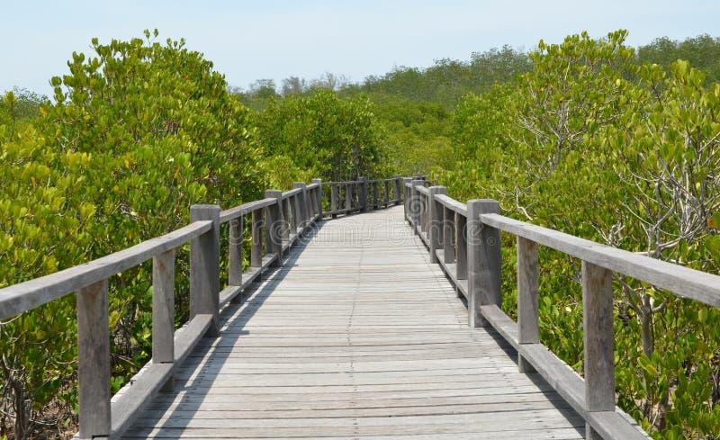A floresta dos manguezais em Ásia imagem de stock royalty free