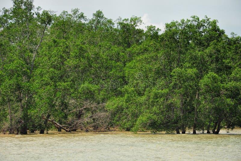 Floresta dos manguezais em 3Sudeste Asiático fotografia de stock