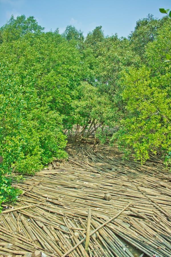 Floresta dos manguezais, Tailândia fotos de stock