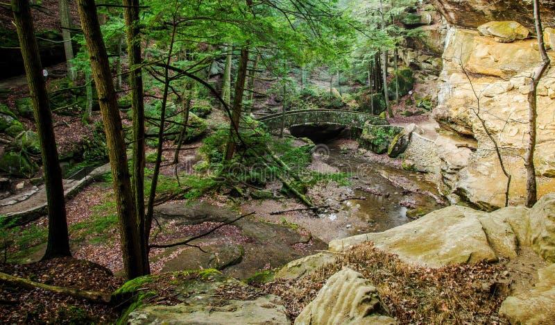 Floresta dos montes de Hocking foto de stock