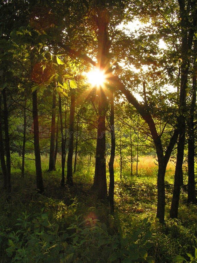 Floresta dourada imagem de stock royalty free