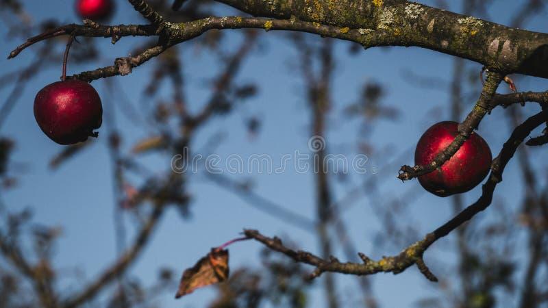 Floresta dourada do outono rico com raios do sol foto de stock royalty free