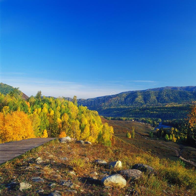 Floresta dourada no nascer do sol fotos de stock