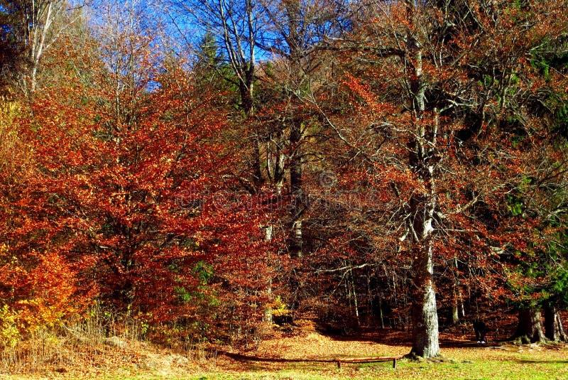 Floresta dramática do outono foto de stock royalty free