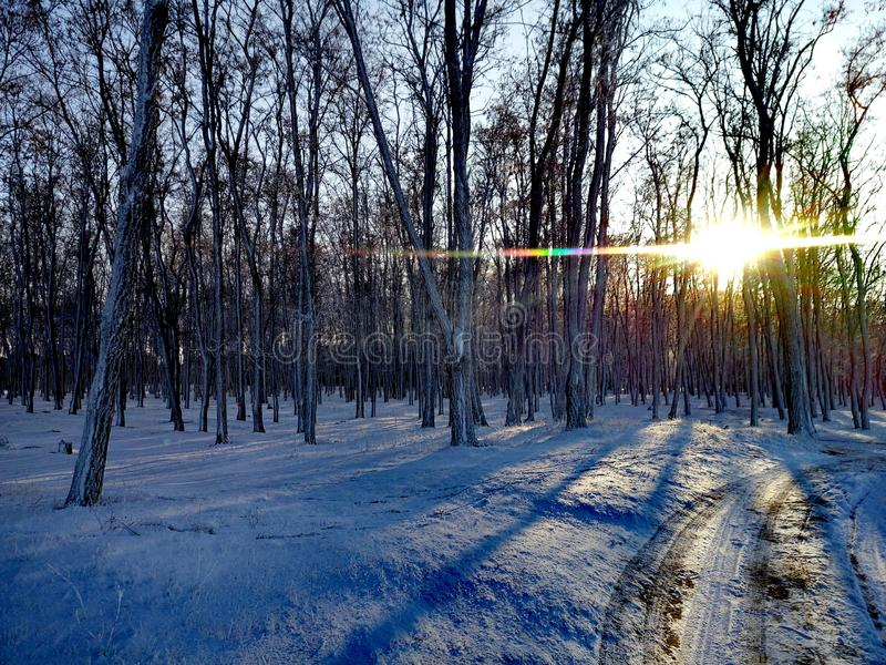Floresta durante o inverno fotografia de stock royalty free