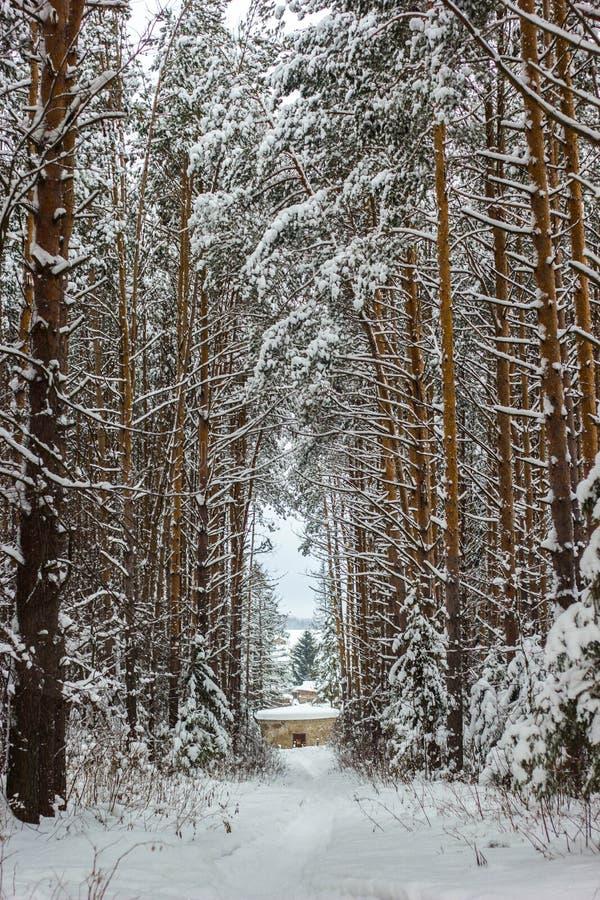 Floresta e árvores congeladas inverno foto de stock
