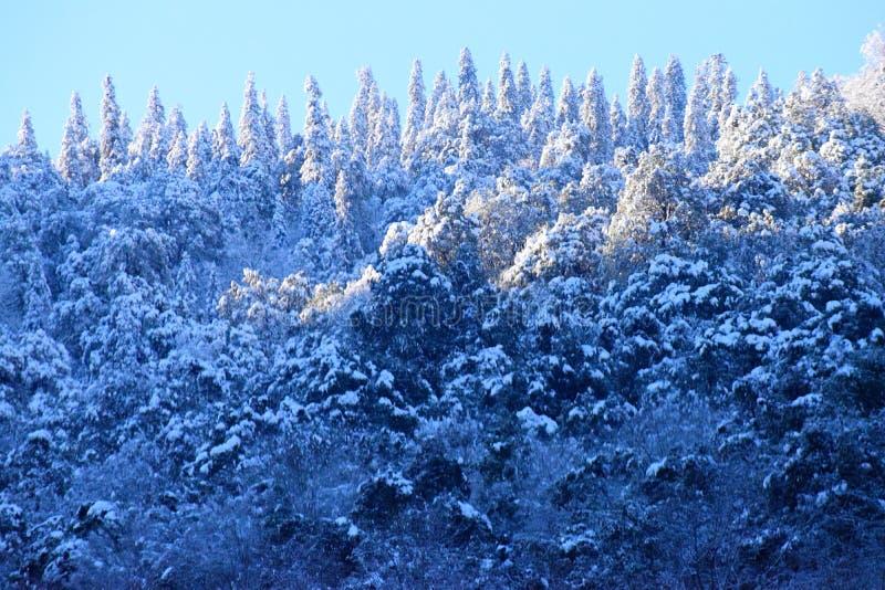 Floresta e árvores de Deodar nas montanhas Himalaias cobertas pela neve com a luz solar na parte superior contra o céu azul foto de stock