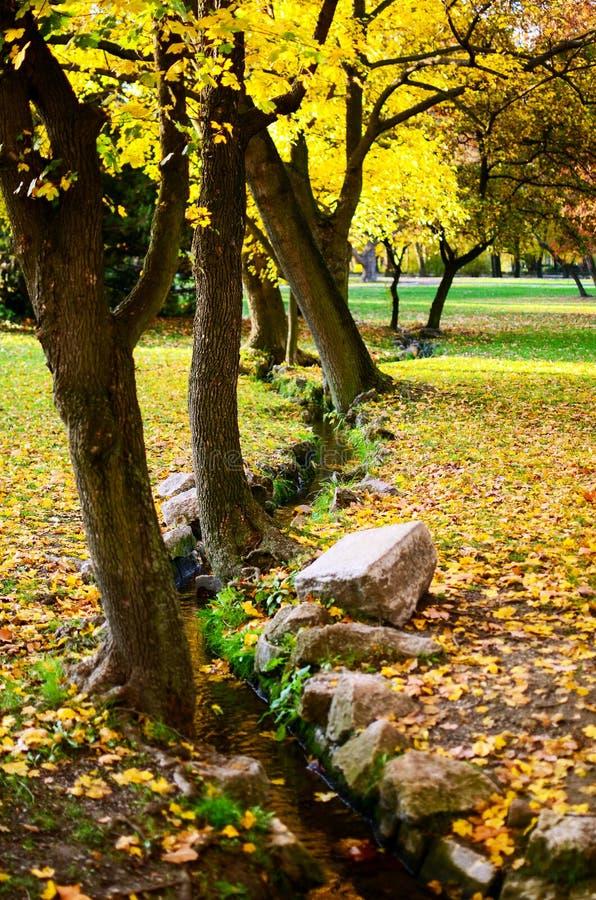 Floresta e angra do outono foto de stock