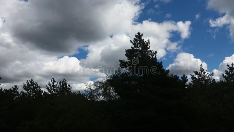 Floresta e céu foto de stock royalty free