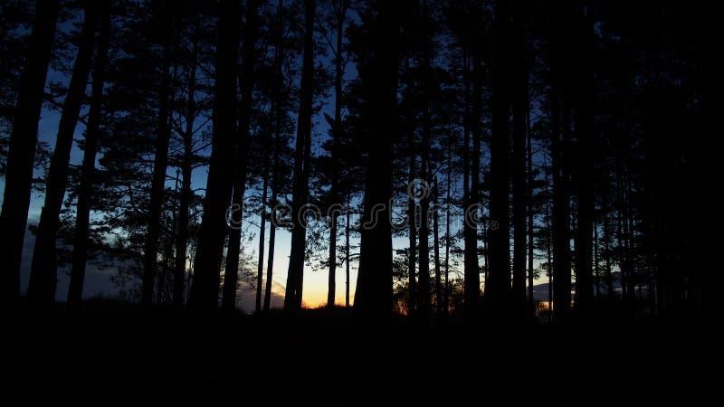 Floresta e céu azul após o por do sol fotografia de stock