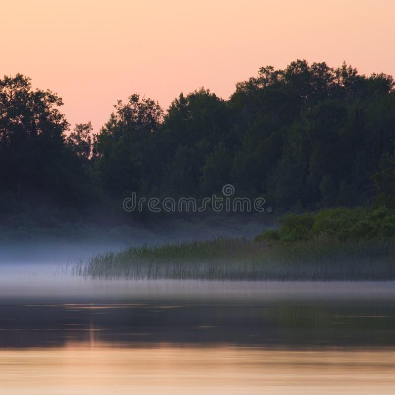 Floresta e calma enevoada da manhã fotografia de stock