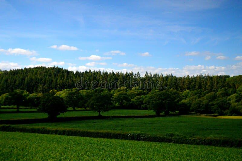 Floresta e campos verdes fotografia de stock royalty free