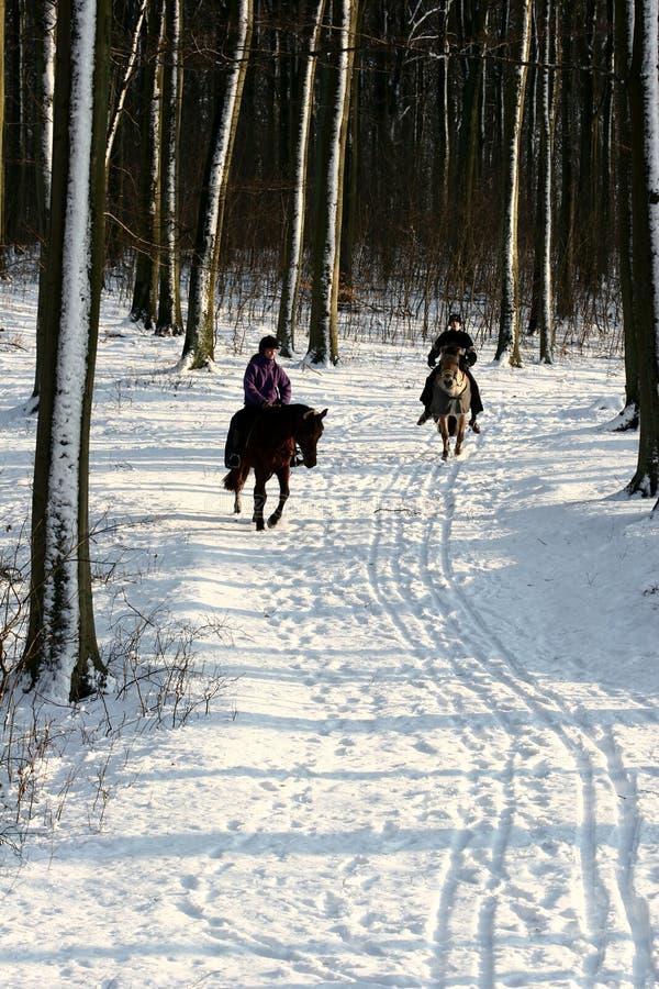Floresta e cavaleiros do inverno fotografia de stock
