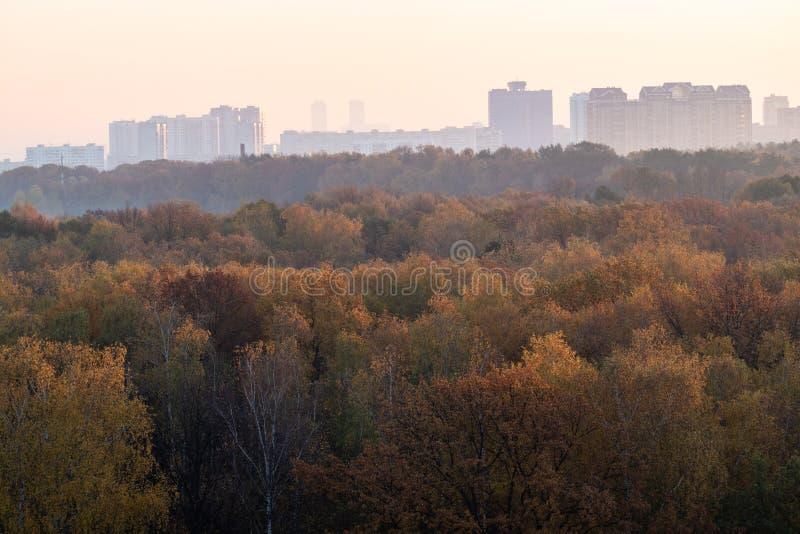 floresta e cidade do outono no horizonte no nascer do sol cor-de-rosa fotografia de stock royalty free