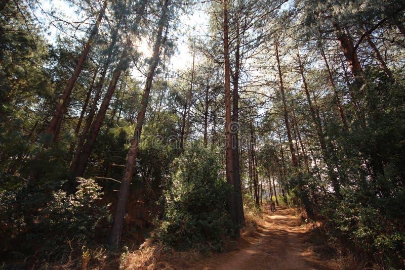 Floresta e estrada africanas imagem de stock
