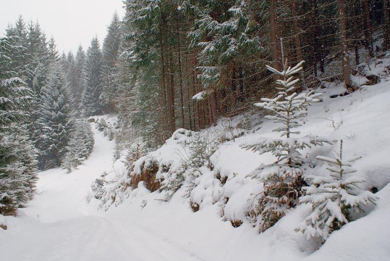 Floresta e estrada densas do inverno com as árvores novas na queda de neve imagem de stock royalty free