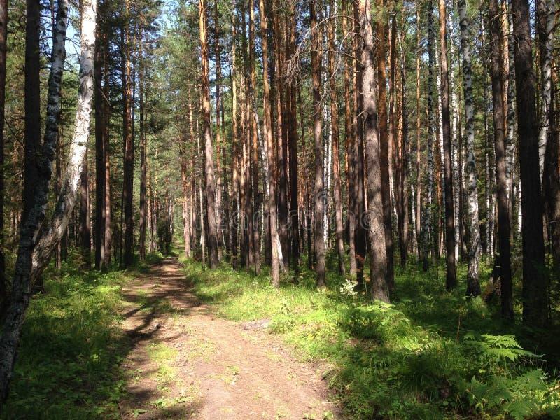 Floresta e estrada mágicas do pinho imagens de stock royalty free